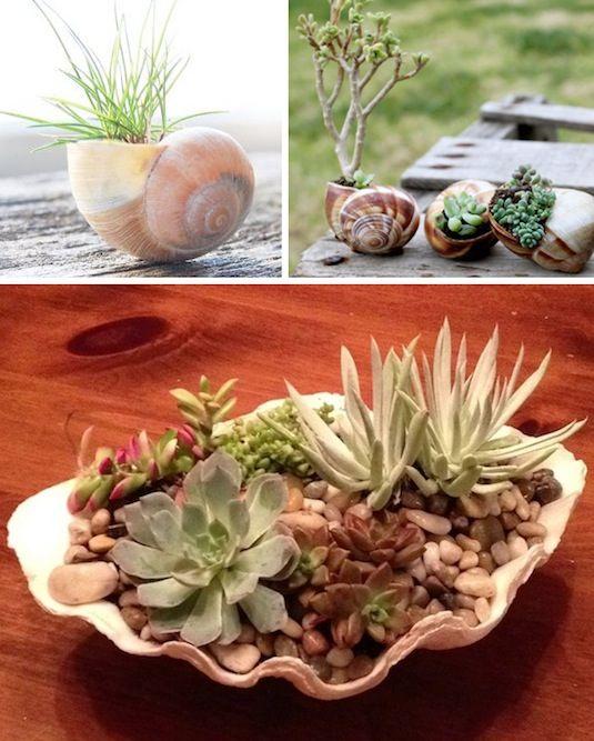 24 Idéias Creative Container Garden |  Use conchas para pequenas plantas!
